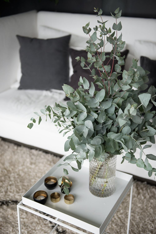En bunte eukalyptus
